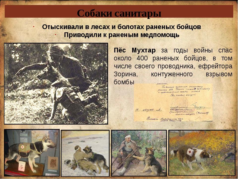 Собаки санитары Отыскивали в лесах и болотах раненых бойцов Приводили к ранен...