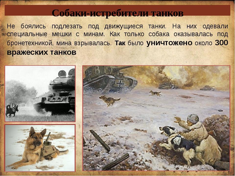 Собаки-истребители танков Не боялись подлезать под движущиеся танки. На них о...