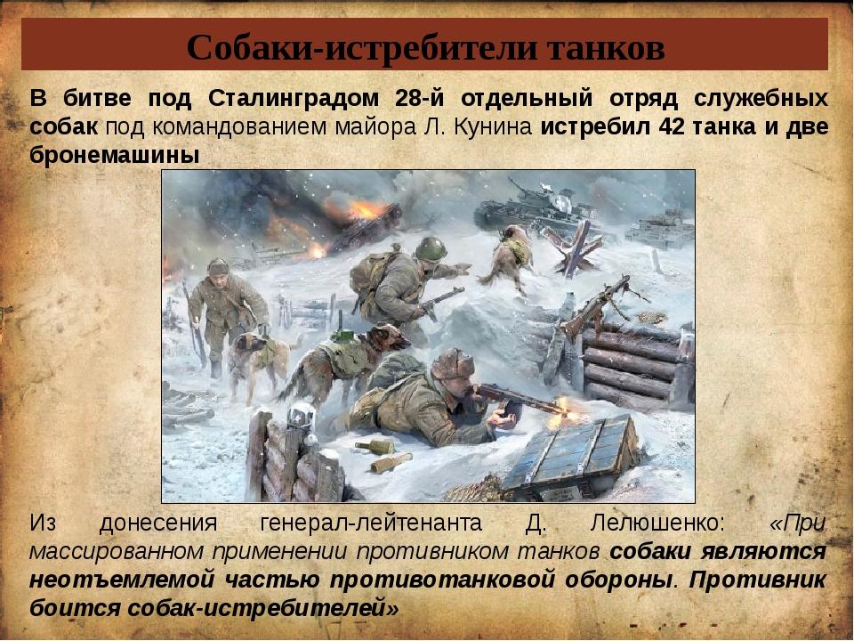 Собаки-истребители танков Из донесения генерал-лейтенанта Д. Лелюшенко: «При...