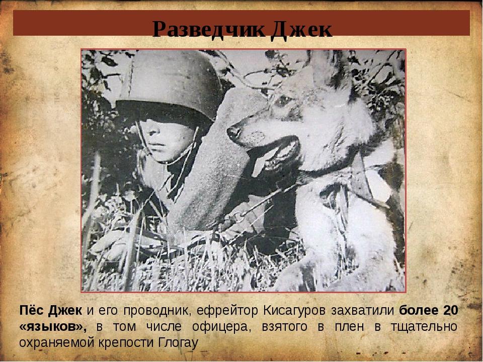 Разведчик Джек Пёс Джек и его проводник, ефрейтор Кисагуров захватили более 2...
