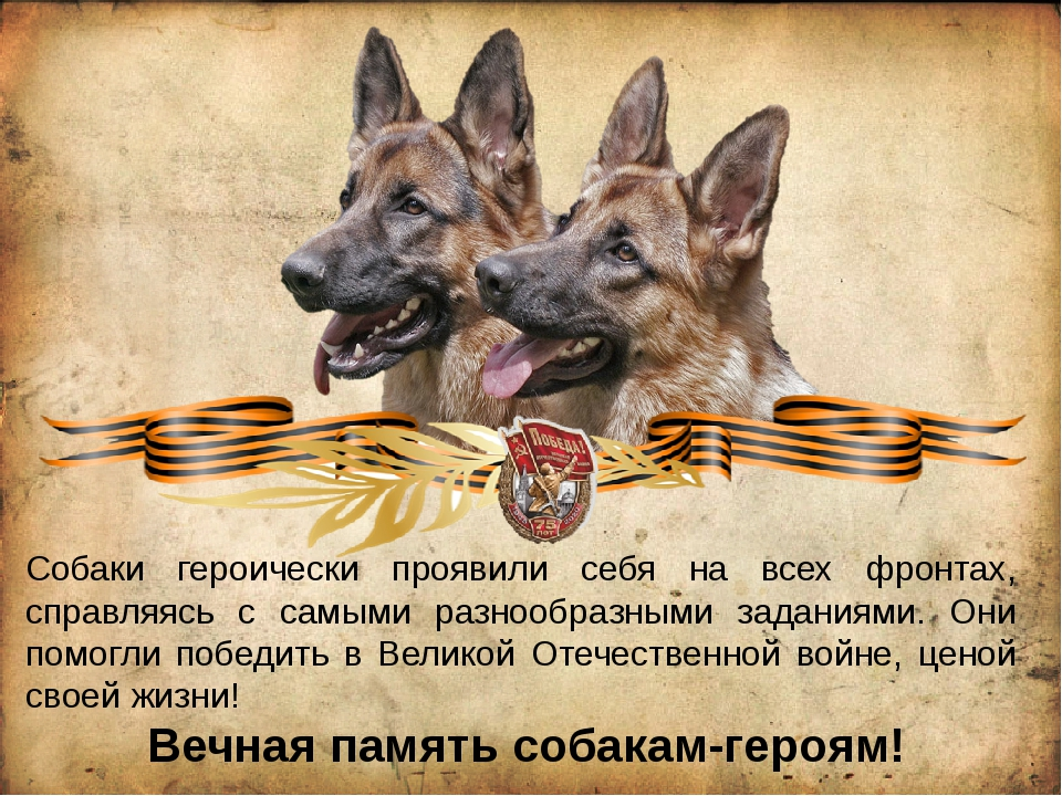 Собаки героически проявили себя на всех фронтах, справляясь с самыми разнообр...