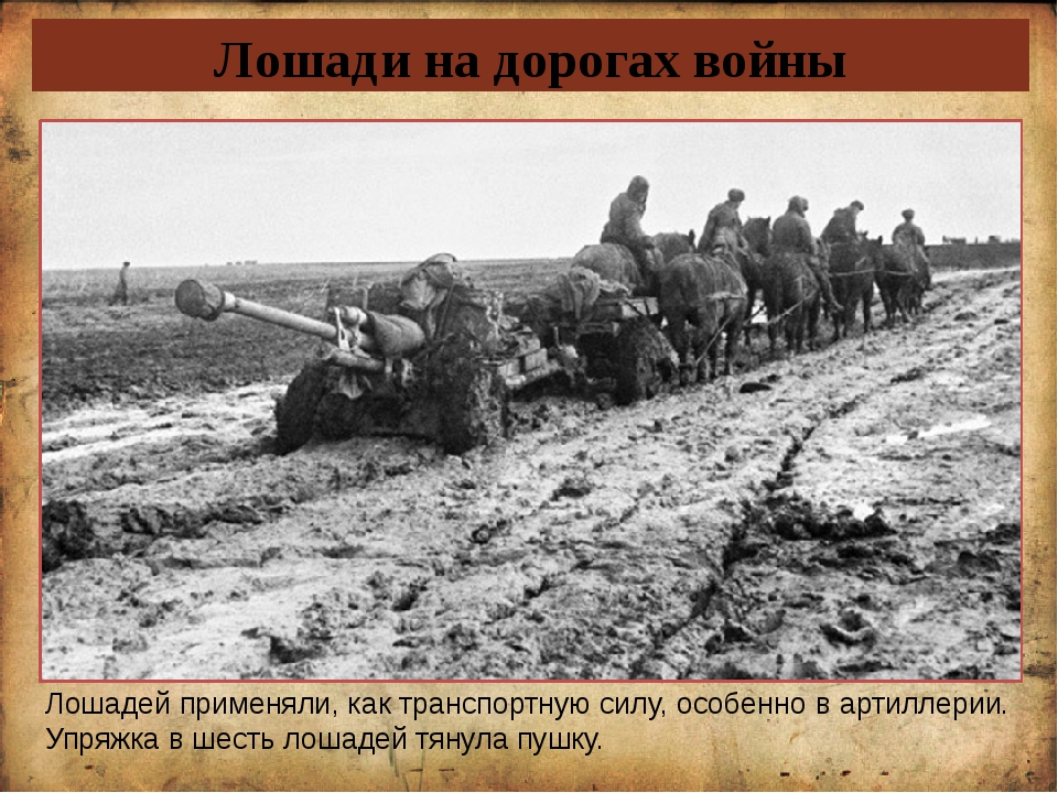 Лошади на дорогах войны Лошадей применяли, как транспортную силу, особенно в...
