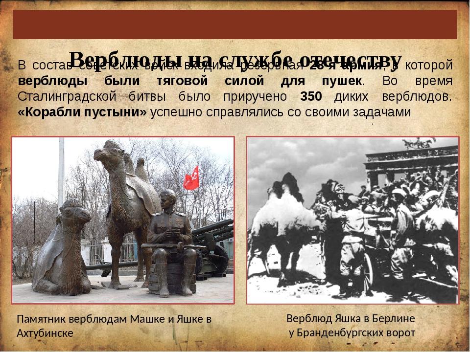 Верблюды на службе отечеству В состав советских войск входила резервная 28-я...
