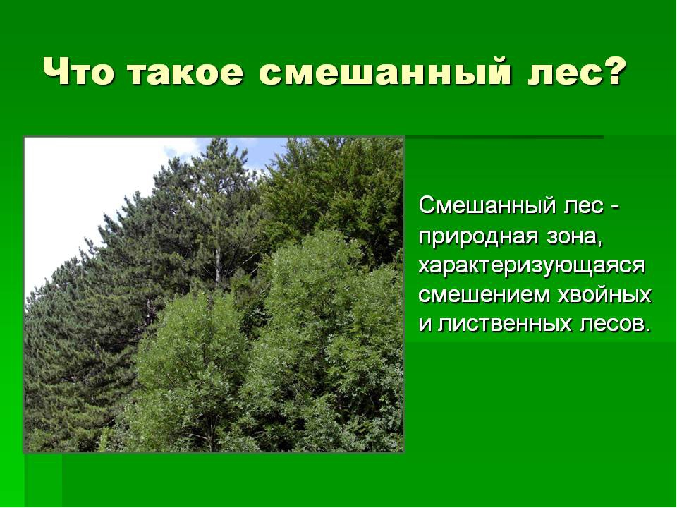 Презентация о лесе с картинками лес