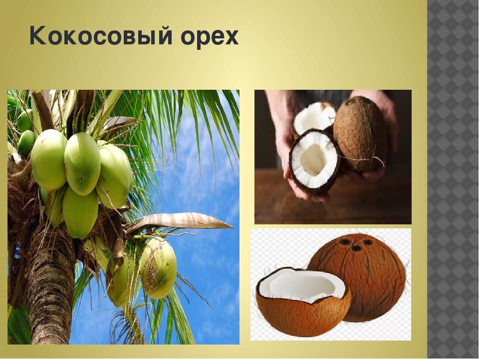 Кокосовыйорех