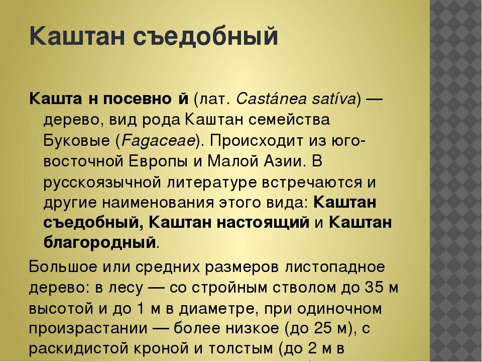 Каштансъедобный Кашта́н посевно́й(лат.Castánea satíva)—дерево,видрода...