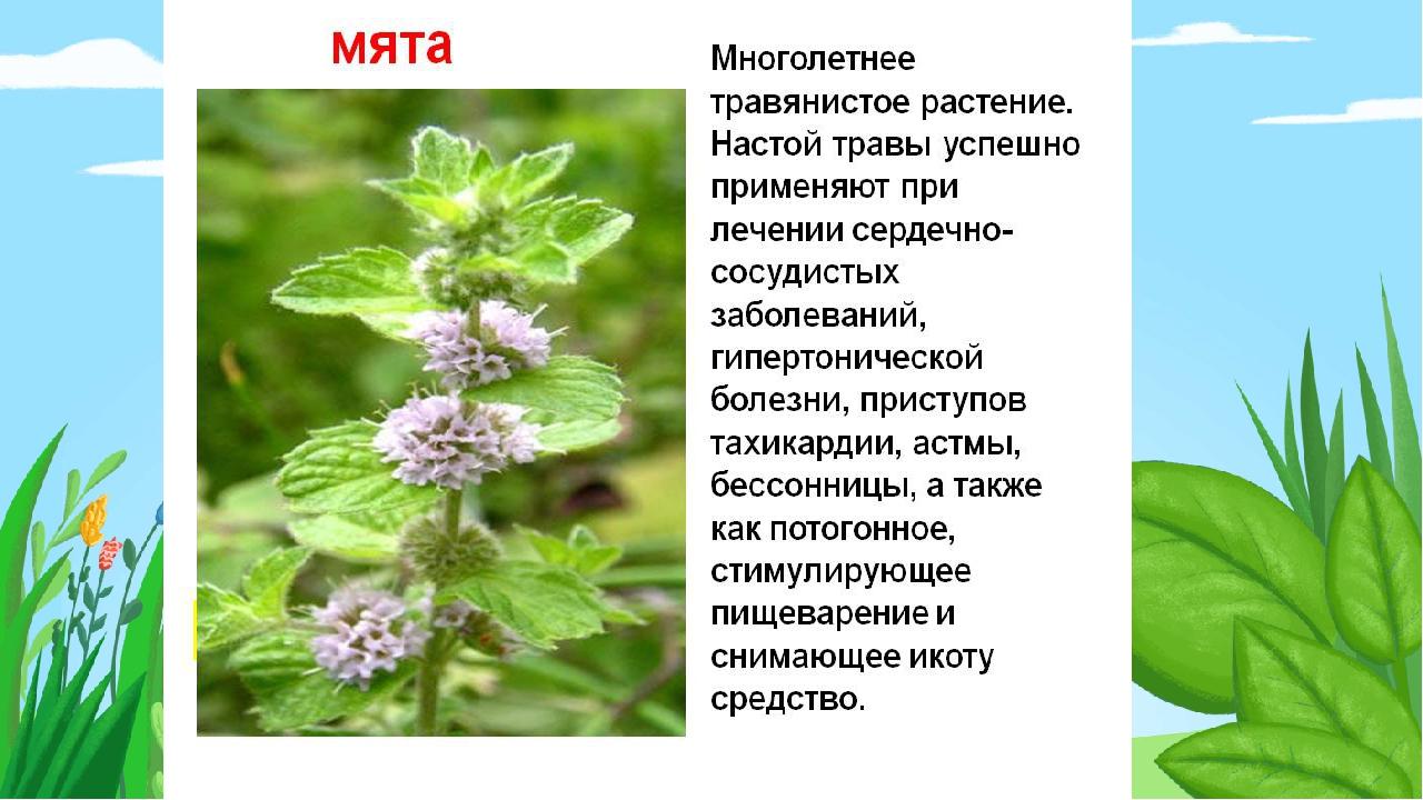 картинка с рассказами лекарственные растений