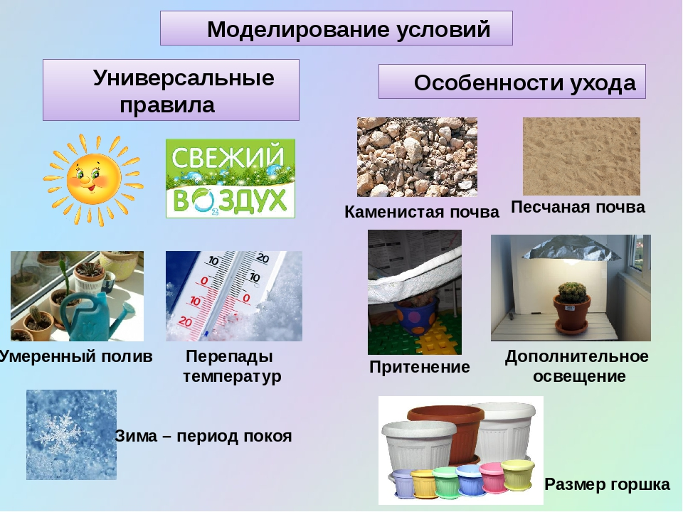 Моделирование условий Универсальные правила Особенности ухода Умеренный полив...