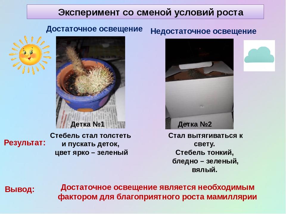 Эксперимент со сменой условий роста Детка №1 Достаточное освещение Детка №2 Н...