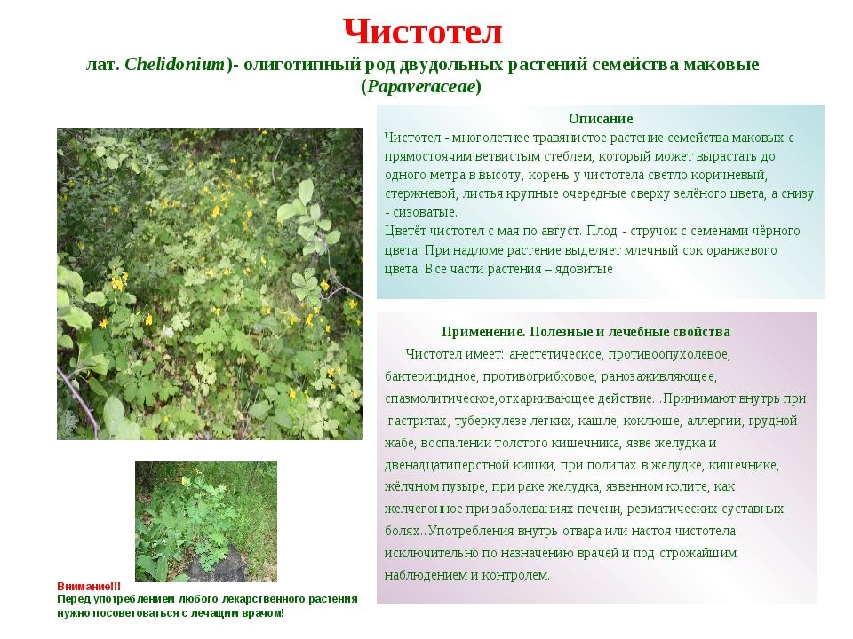 Ведьмиными называются травы, содержащие вещества с галлюциногенными или психотропными свойствами.