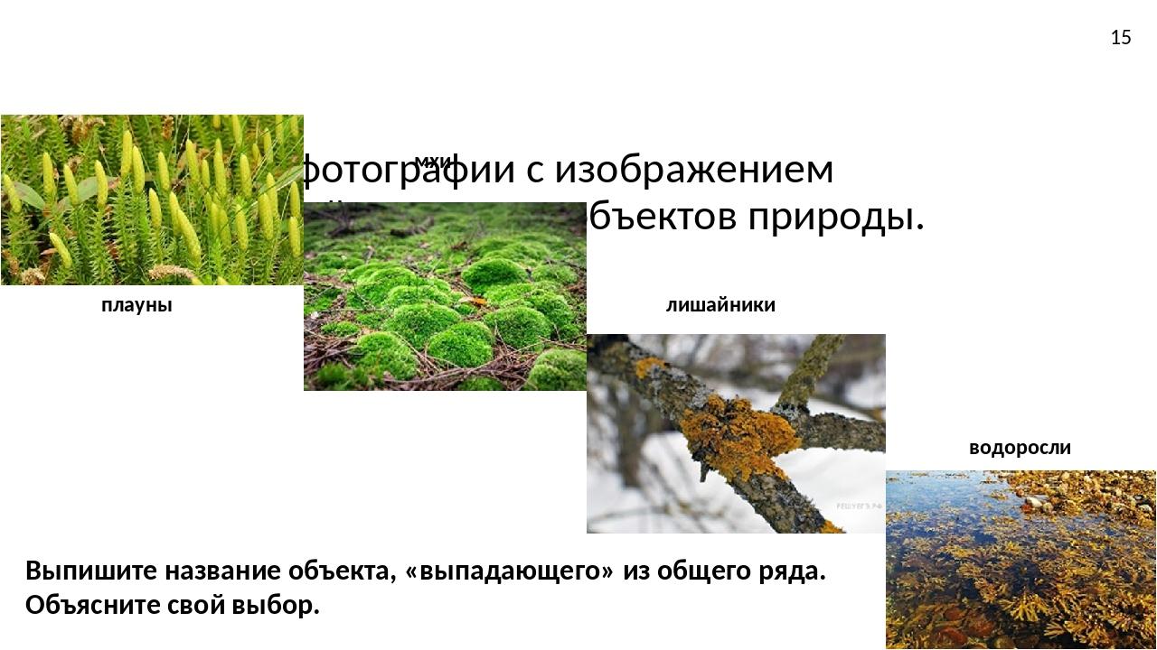 Рассмотрите фотографии с изображением представителей различных объектов прир...