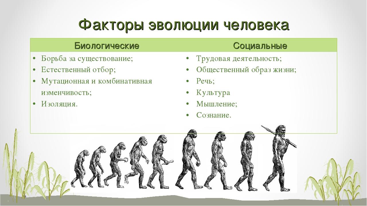 Факторы эволюции человека БиологическиеСоциальные Борьба за существование; Е...