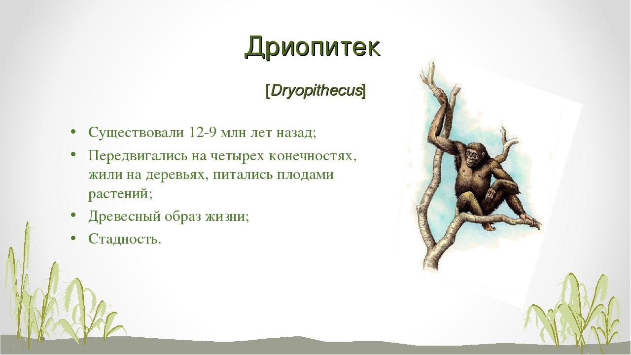Дриопитек [Dryopithecus] Существовали 12-9 млн лет назад; Передвигались на че...