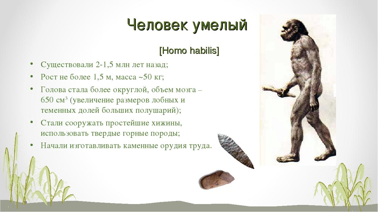 Человек умелый [Homo habilis] Существовали 2-1,5 млн лет назад; Рост не более...
