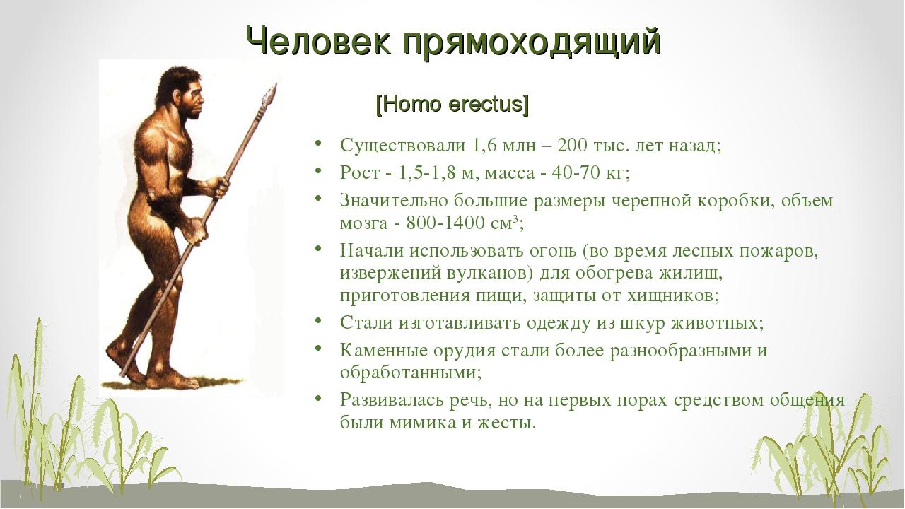 Человек прямоходящий [Homo erectus] Существовали 1,6 млн – 200 тыс. лет назад...