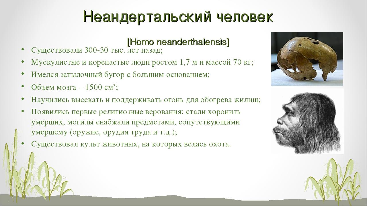 Неандертальский человек [Homo neanderthalensis] Существовали 300-30 тыс. лет...