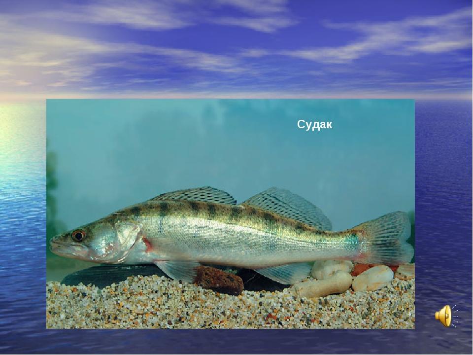 вас, как какие рыбы водятся в каспийском море фото маленькая компания