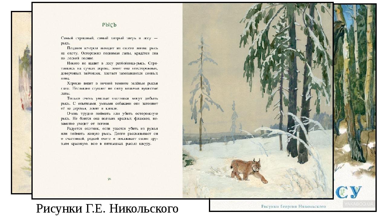Рисунки Г.Е. Никольского