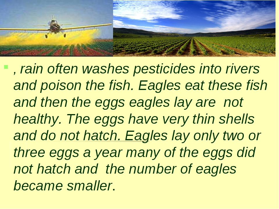 , rain often washes pesticides into rivers and poison the fish. Eagles eat th...