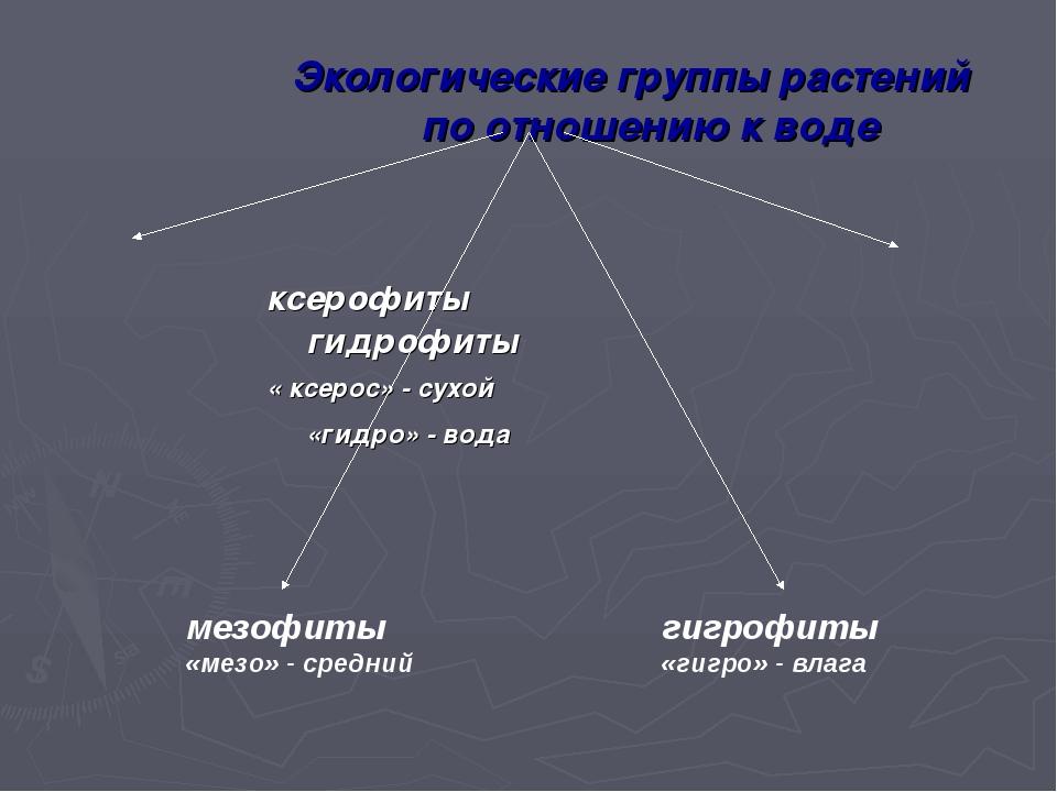 Экологические группы растений по отношению к воде ксерофиты гидрофиты « ксеро...