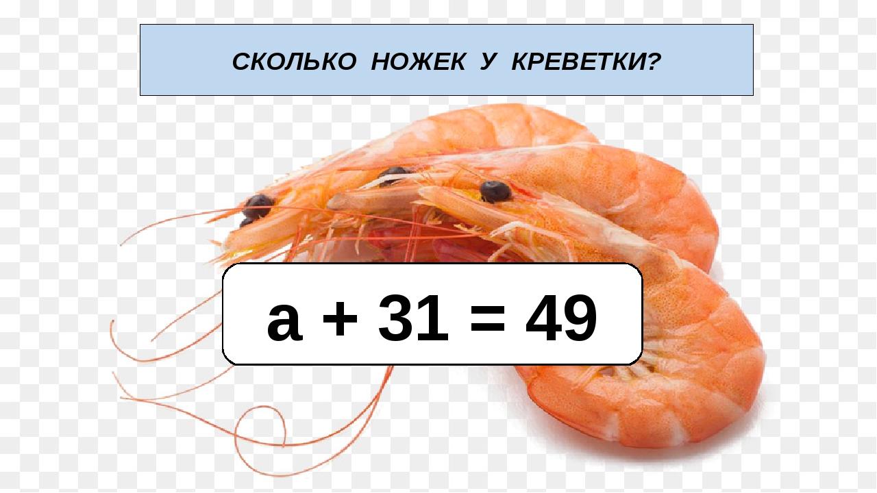 СКОЛЬКО НОЖЕК У КРЕВЕТКИ? а + 31 = 49