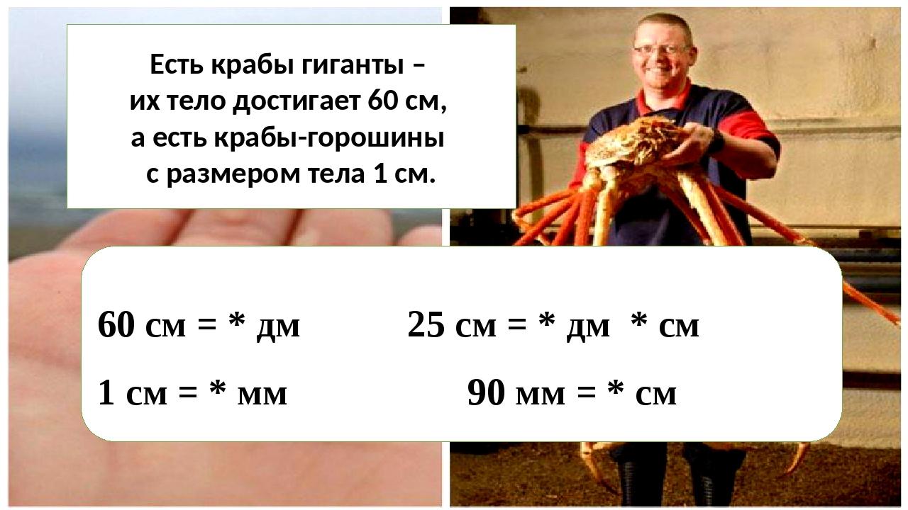 Есть крабы гиганты – их тело достигает 60 см, а есть крабы-горошины с размеро...