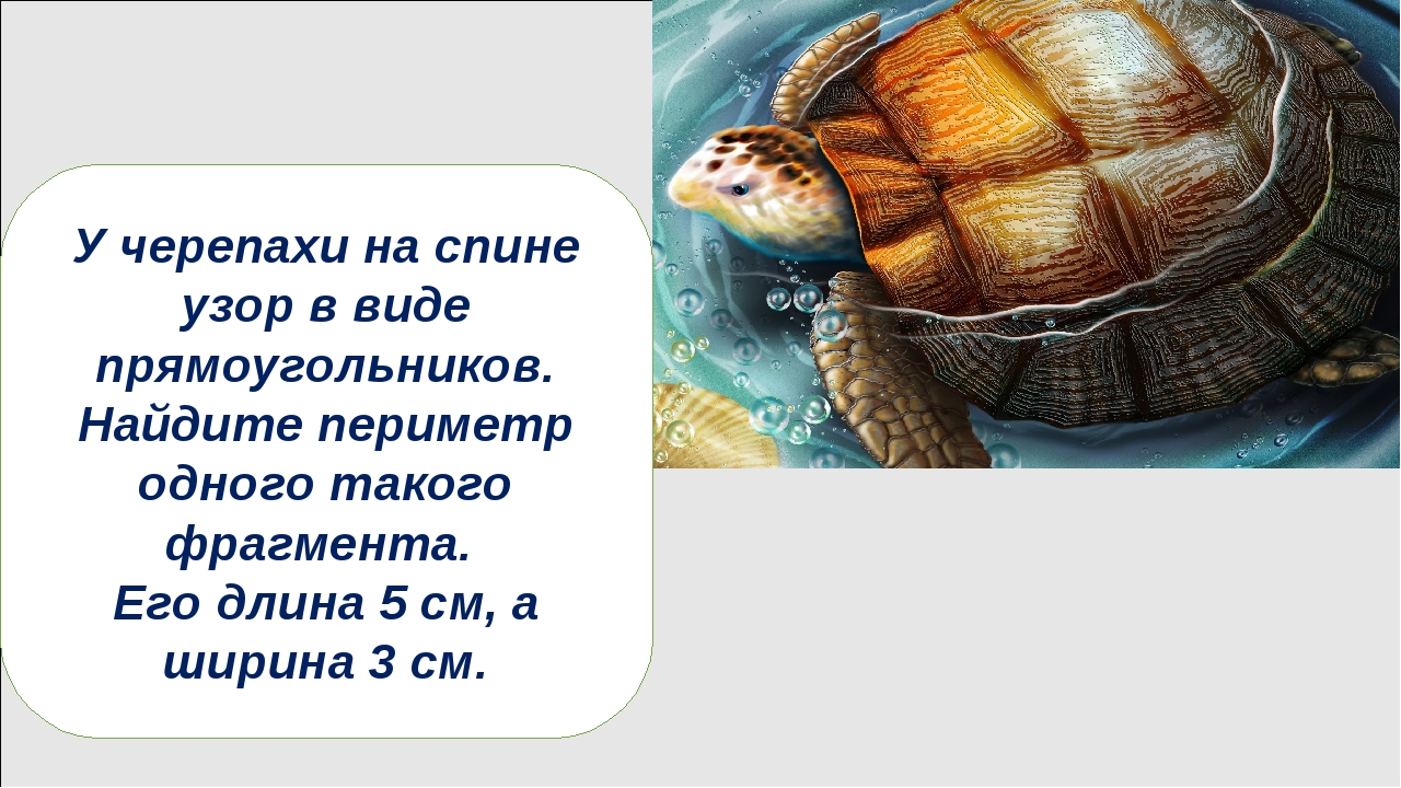 В отличие от сухопутных черепах морские не могут прятать голову под панцирь....