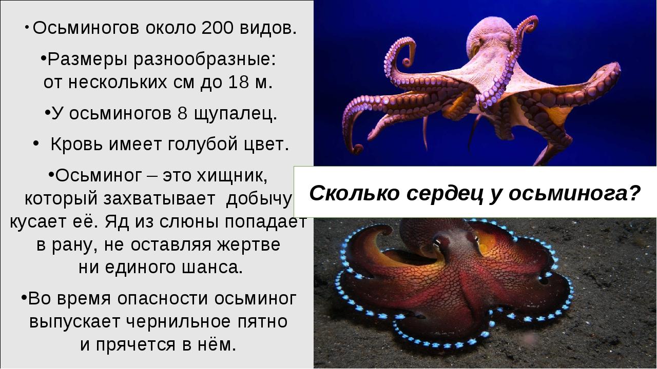 Осьминогов около 200 видов. Размеры разнообразные: от нескольких см до 18 м....