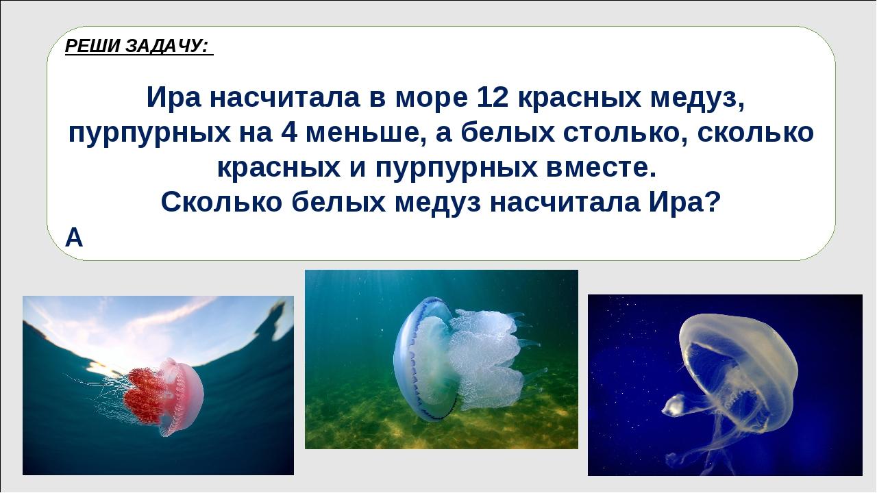 Медузы – это необычные животные, прозрачные и студенистые. По форме они напом...