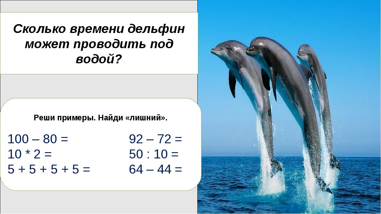 Дельфины очень умные, поэтому их называют «людьми моря» Дельфины могут издава...