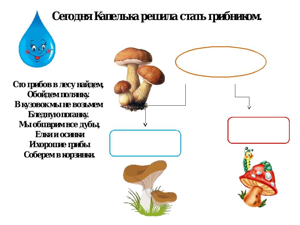 Сегодня Капелька решила стать грибником. Сто грибов в лесу найдем, Обойдем по...