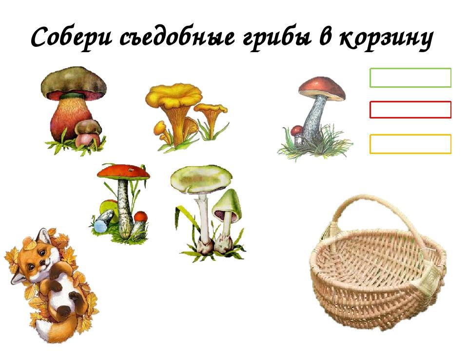 Собери съедобные грибы в корзину лисички подосиновик подберёзовик