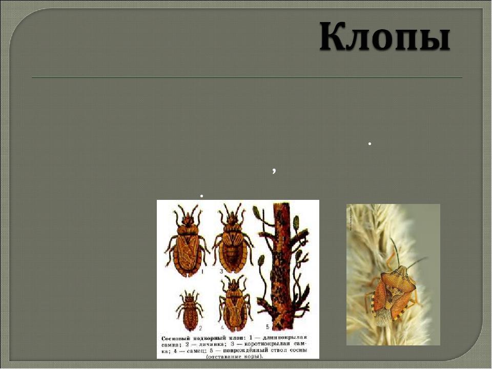 Вредители леса насекомые фото и описание презентация