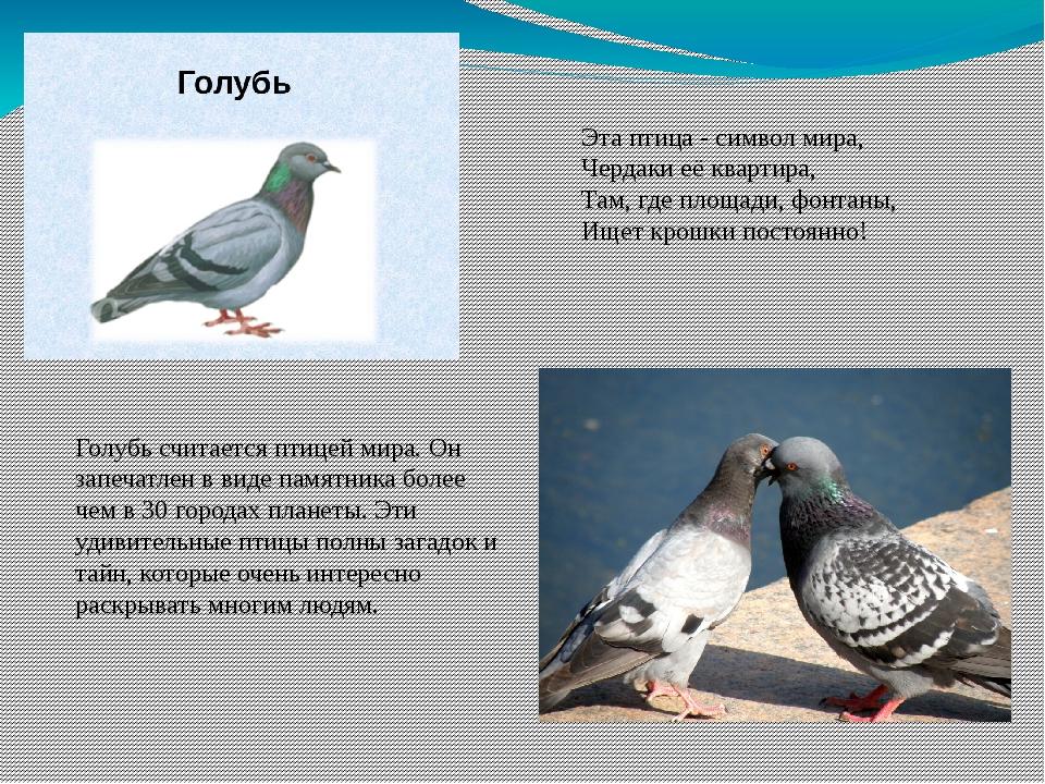 Эта птица - символ мира, Чердаки её квартира, Там, где площади, фонтаны, Ищет...