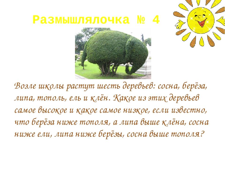 Размышлялочка № 4 Возле школы растут шесть деревьев: сосна, берёза, липа, топ...