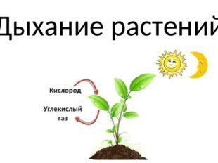 Дыхание растения в картинках