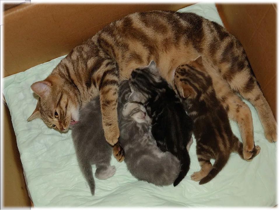 как фото забота домашних животных о потомстве ним