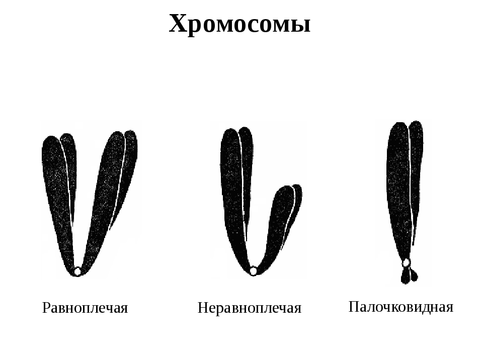 типы хромосом картинки