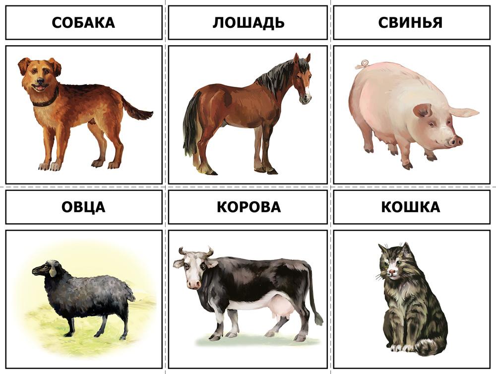 Карточки с животными для детей картинки с пояснением распечатать
