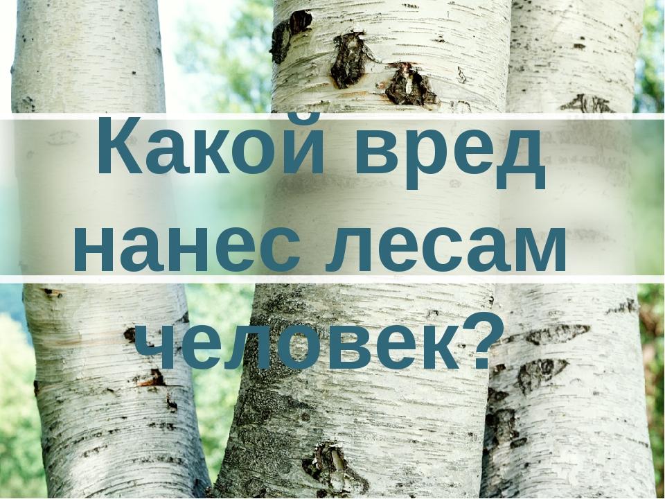 Какой вред нанес лесам человек?