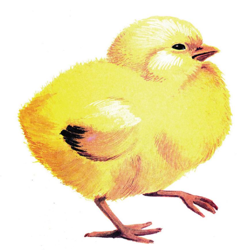 Птицы для самых маленьких