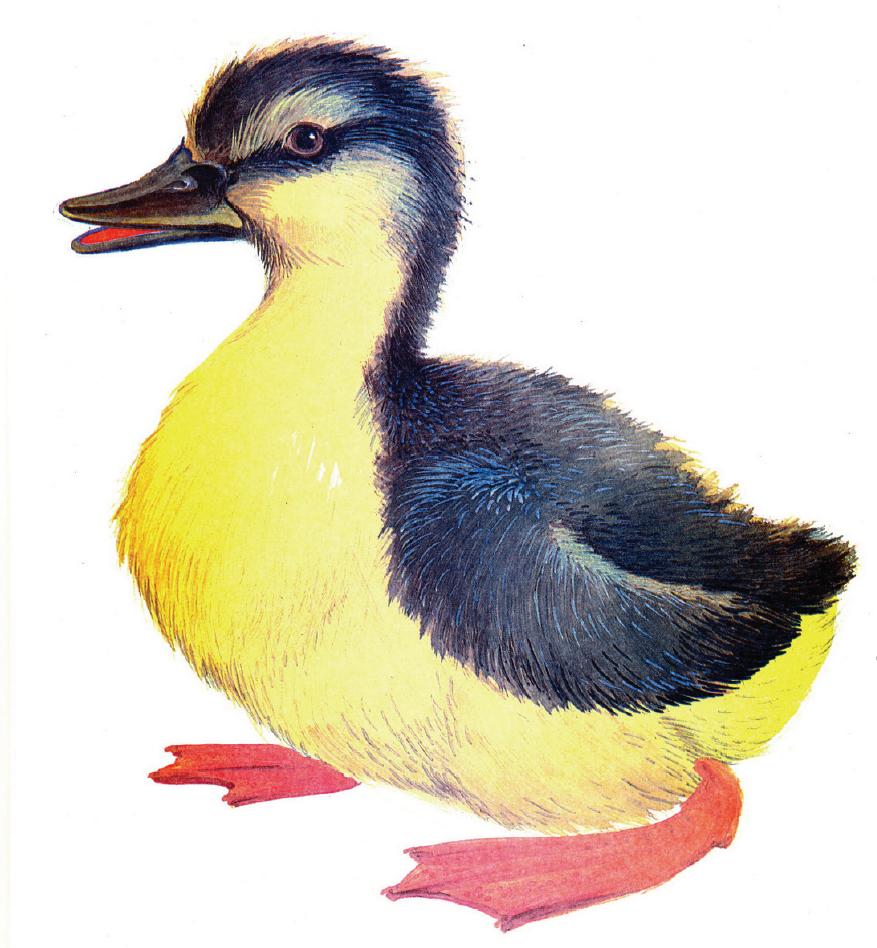 картинки домашние животные и птицы кролика книги