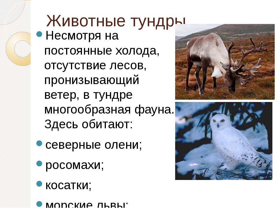 того, все о животных тундры с картинками составили список