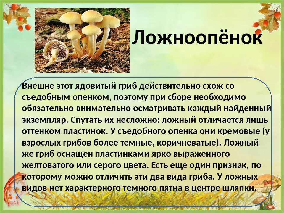 ядовитые грибы фото и описание кратко лоуид