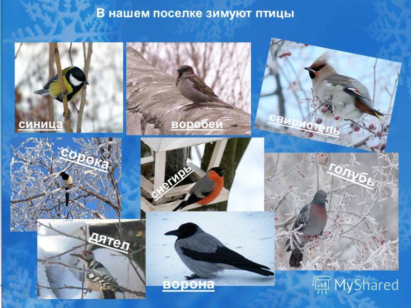 желтковую птицы зимующие в ярославской области фото с названиями нашем магазине представлен
