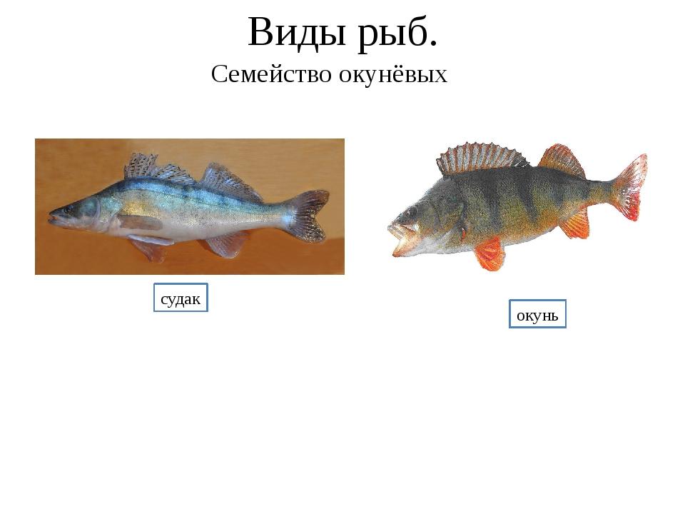 Семейство окуневых рыб в картинках