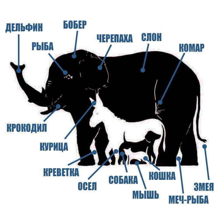 сколько животных видишь на картинке ответ этом уроке
