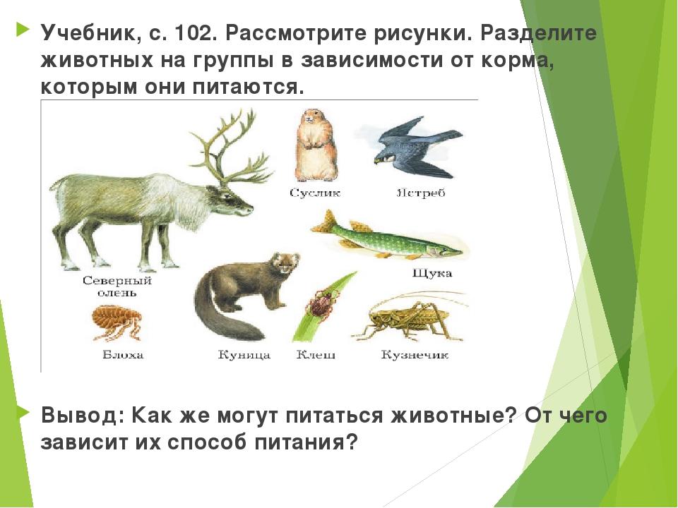 Учебник, с. 102. Рассмотрите рисунки. Разделите животных на группы в зависимо...