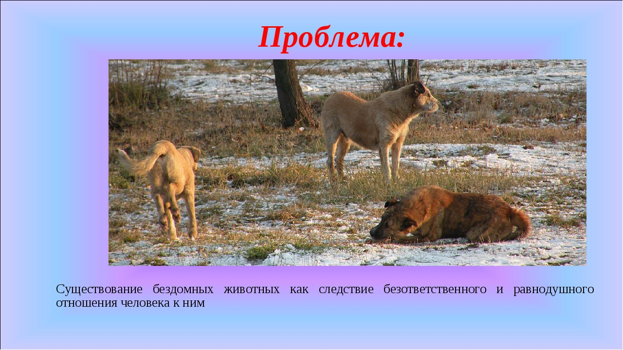 Проблема: Существование бездомных животных как следствие безответственного и...
