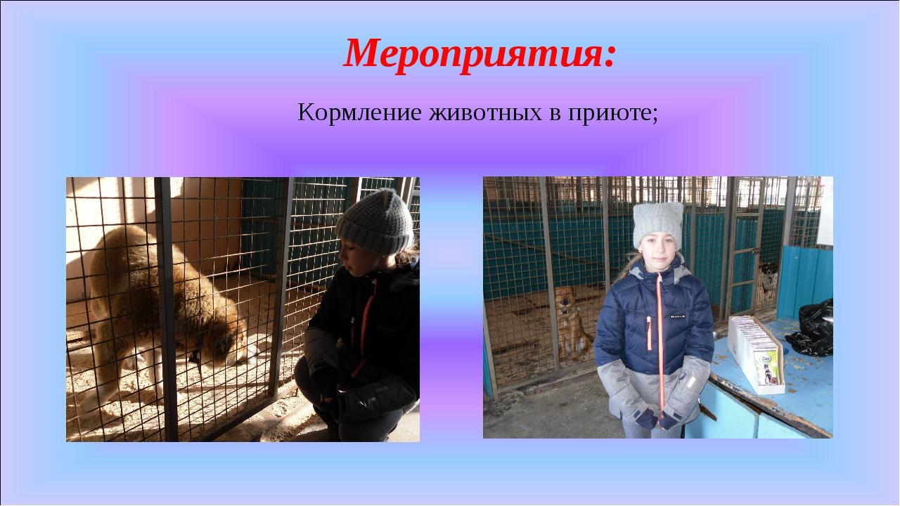 Мероприятия: Кормление животных в приюте;